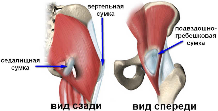 строение сумок тазобедренного сустава