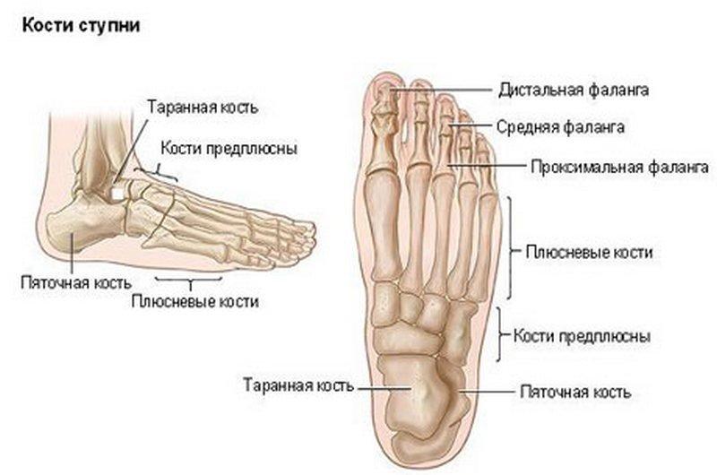 Пальцы стопы: строение